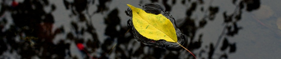 cropped-comp_IMGP7060-Kopie.jpg